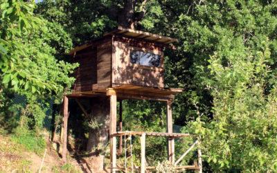 casa-su-albero